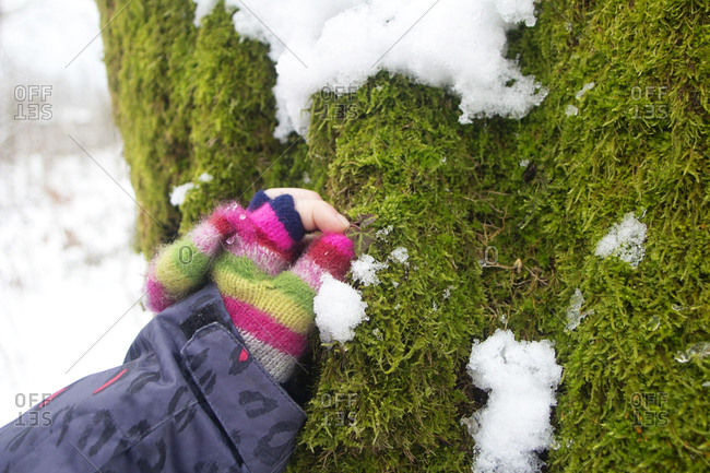 Hand of girl touching moss on tree in winter