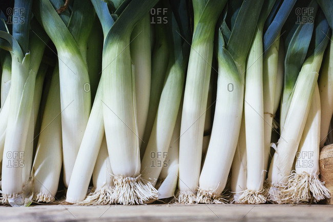 Full-frame image of leeks, from sustainable organic agriculture.