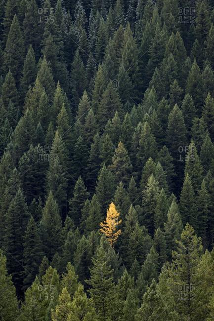 Fall, Kootenay National Park - Offset
