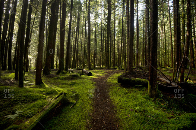 Footpath amidst forest, Wilderness, Washington, USA