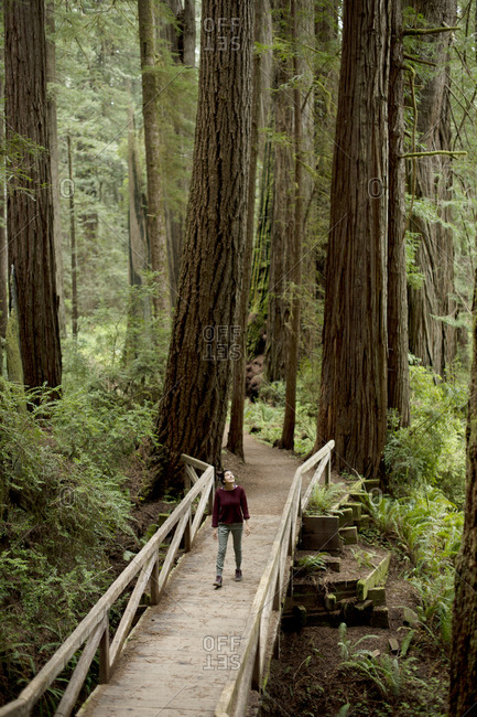 Woman walking along footbridge in redwood forest, Redwoods, California, USA