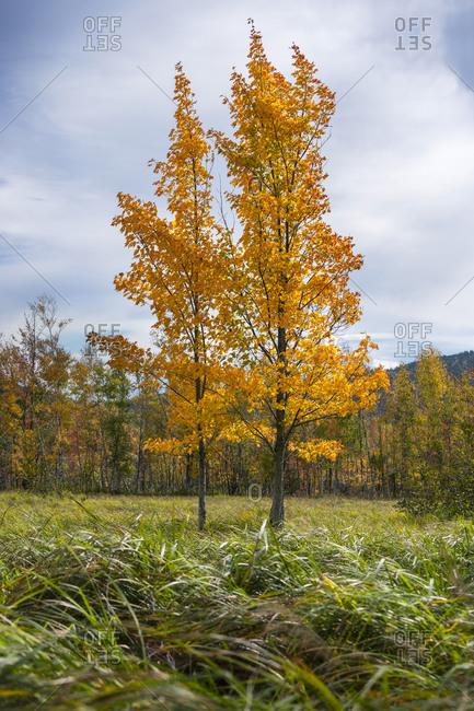 Autumn in Acadia National Park, Maine, USA