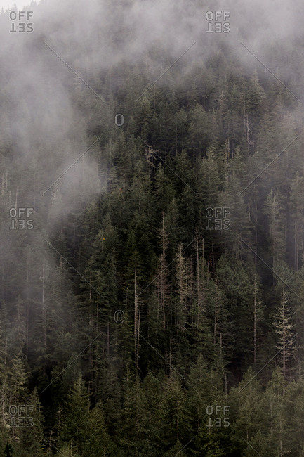 Clouds over green forest, Port Angeles, Washington, USA