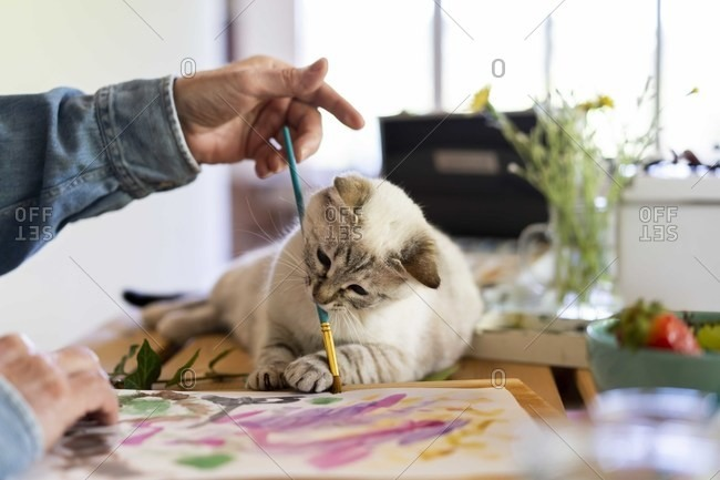 Cute cat holding paintbrush in mouth with senior man at home