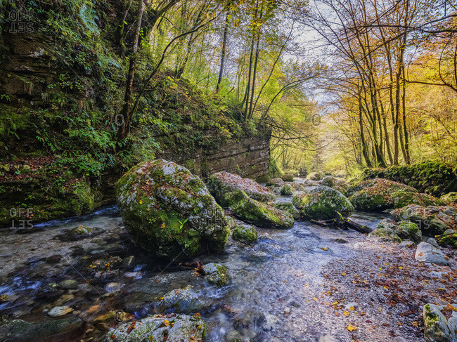 Slovenia- Soca river flowing between mossy boulders in autumn forest