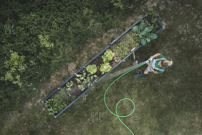 Aerial view of woman watering vegetables growing in raised bed at yard