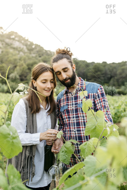 Couple examining grape plants at vineyard against clear sky