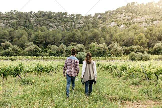 Couple walking in lush vineyard, back view