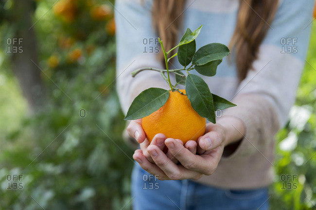 Close-up of woman holding orange while standing in organic farm