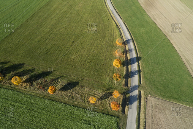 Germany- Bavaria- Drone view of Norway maples (Acer platanoides) growing beside country road in autumn