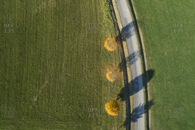 Germany- Bavaria- Drone view of Norway maples(Acerplatanoides)growing beside country road in autumn