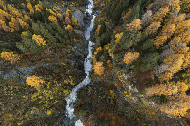 Switzerland- Canton of Grisons- Drone view of Orlegna river canyon surrounded by larch forest in autumn