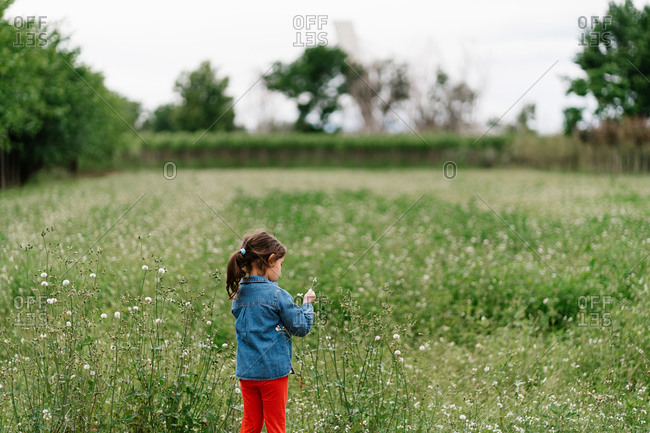 Back view of curious kid in casual clothes picking dandelions while enjoying weekend on green field
