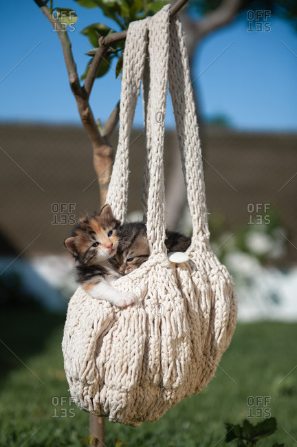 Adorable kittens relaxing in knitted handbag hanging on tree branch in courtyard on sunny day