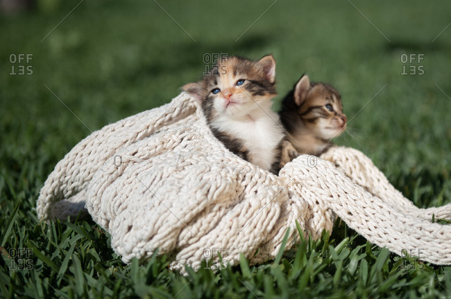 Cute little kittens lying on knitted bag placed on green grass in park