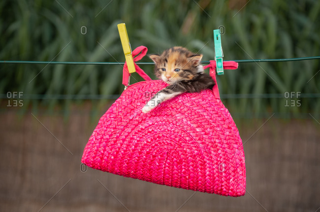 Adorable kitten relaxing in knitted pink handbag hanging with clothes tongs on tree branch in courtyard on sunny day