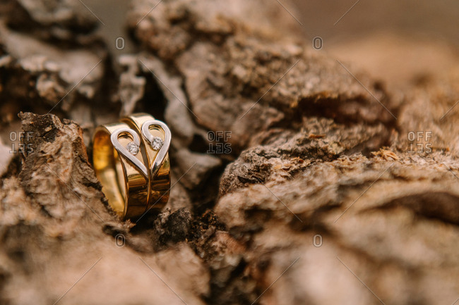 Closeup of golden wedding rings placed on tree bark before wedding ceremony