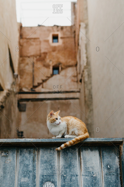Cat relaxing on stone wall of old building on street