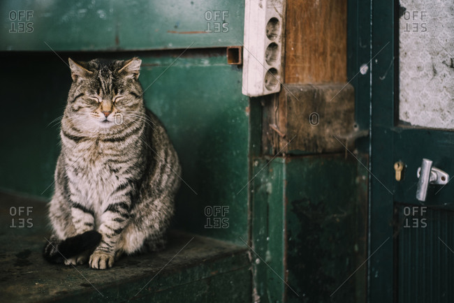 Cute tabby cat sitting with closed eyes on stairway of shabby house