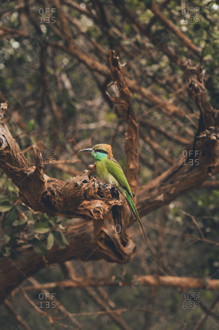 Side view of bee eater with colorful plumage sitting on branch of tree in safari park