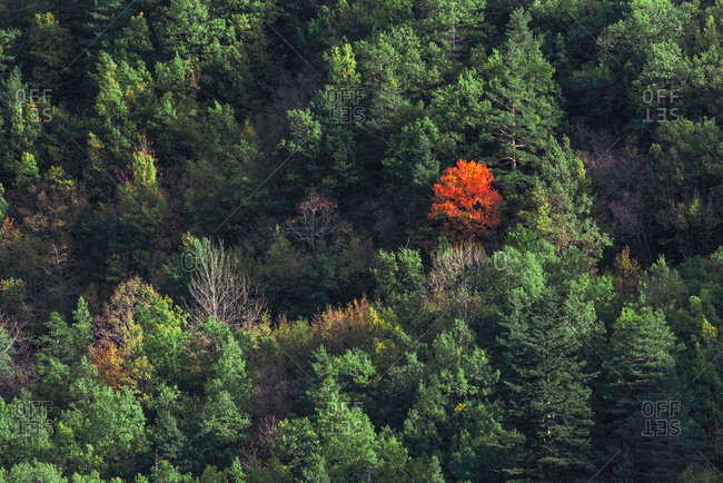 Picturesque drone view of trees covered in forest on hill slope on cold autumn day in nature