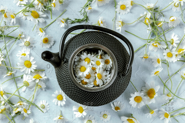 From above rustic pot of chamomile tea served with fresh flowers on blue background