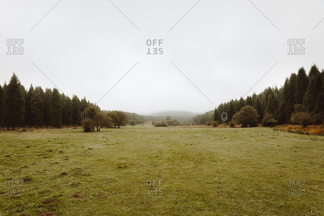 Silent lawn with green grass close to forest and small trees under white sky and fog far away in daylight in rural zone