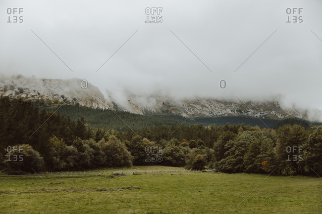 Green meadow near trees on mount with mist on peak under cloudy sky in summer in countryside