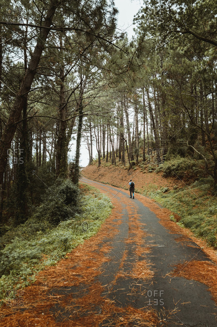 Back view of anonymous traveler strolling on asphalt narrow path surrounded by trees on hill in daylight in countryside
