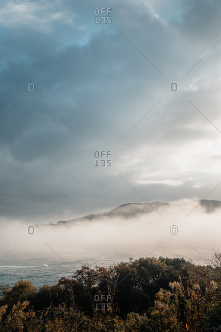 Picturesque view of trees near oceanside partially covered with mist passing near hillside under cloudy sky