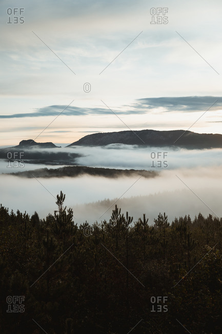 Amazing landscape of mountain range with green trees and dense fog covering valley in early morning hour