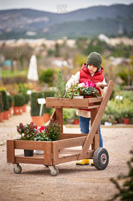 Beautiful boy with red vest and green sweater buying cyclamen plants walking with a wooden cart
