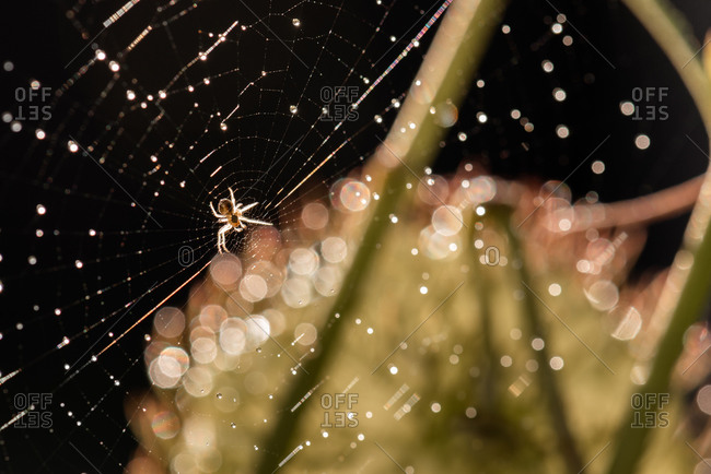 Spider on a web covered in dew droplets
