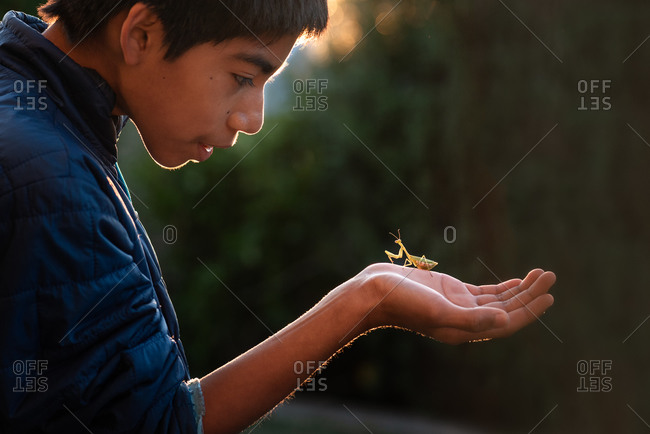 Young pre-teen boy holding a praying mantis in his hand