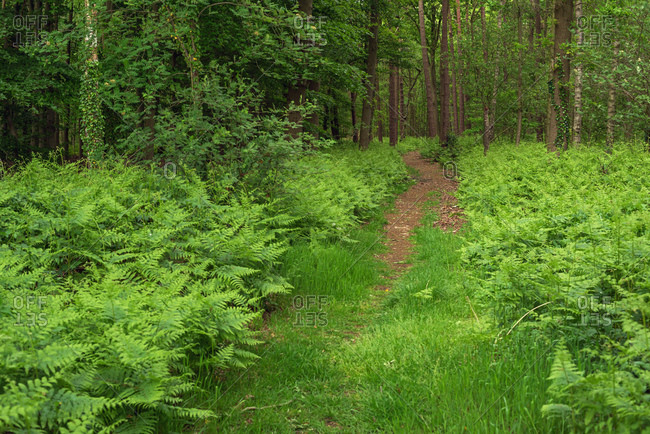 Path surrounded by green lush foliage in the forest