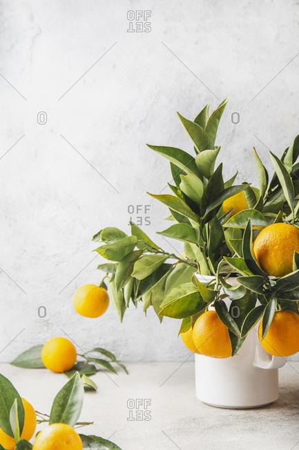 Orange tree branches bouquet with orange fruits in white jar.