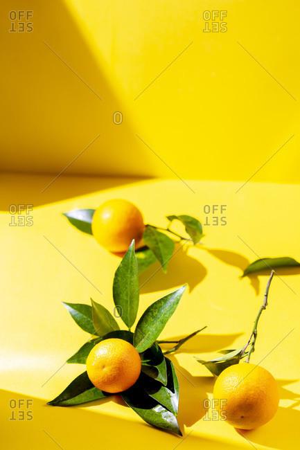 Fresh orange fruits with orange tree leaves on yellow background. sunlight effect.