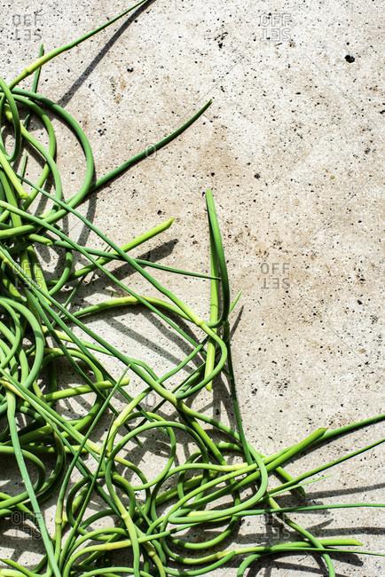 Tangled Garlic Scapes studio shot