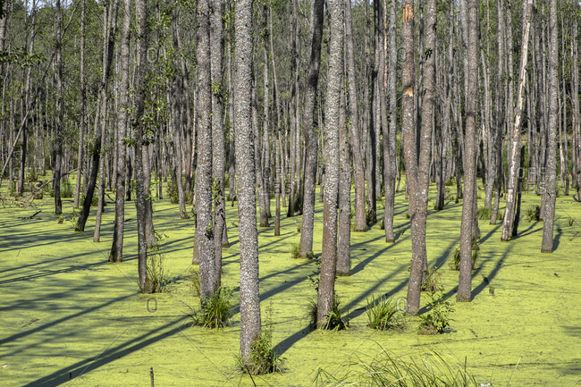 Swamp in Mazury in Poland in Europe