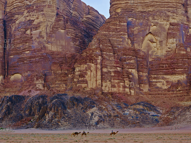 Camels in front of rock face in Wadi Rum, Aqaba Province, Jordan, Middle East,