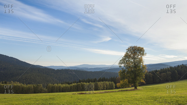Tree on a meadow in the Bohemian Forest, Czech Republic