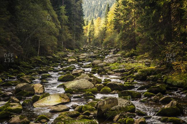 September 29, 2013: Vydra river valley, district Turnerova Chata, municipality of Srni, Bohemian Forest, Czech Republic