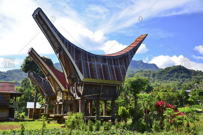 Village with traditional Tongkonan houses, Alang rice storage, Rantepao, Toraja highlands, Tana Toraja, Sulawesi, Indonesia, Southeast Asia