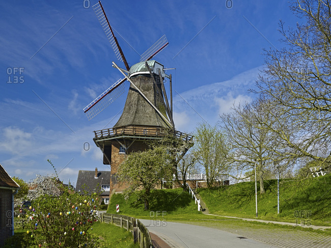 Mill Aurora with cherry blossom in Borstel, district of Jork, Altes Land, district of Stade, Lower Saxony, Germany, Europe