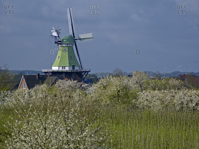 April 13, 2014: Venti Amica windmill in Twielenfleth-Luhe with cherry blossom, Altes Land, Stade district, Lower Saxony, Germany, Europe