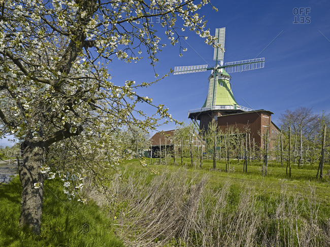 April 12, 2014: Venti Amica windmill in Twielenfleth-Luhe with cherry blossom, Altes Land, Stade district, Lower Saxony, Germany, Europe