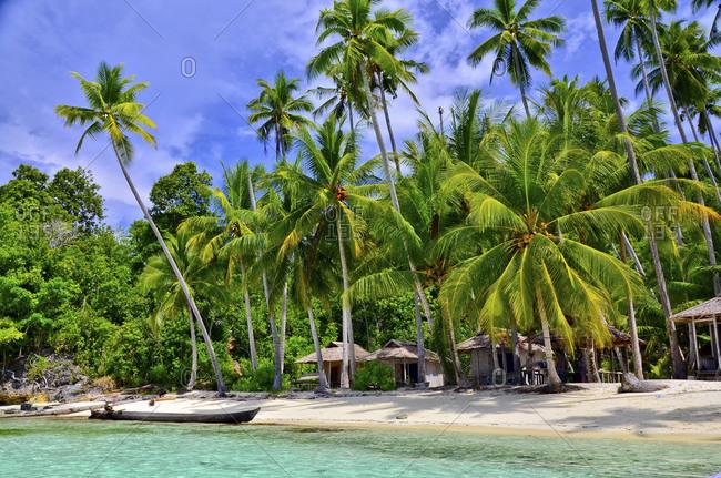 Beach with palm trees, Malenge Island, Tomini Bay, Togian Islands, Sulawesi, Indonesia