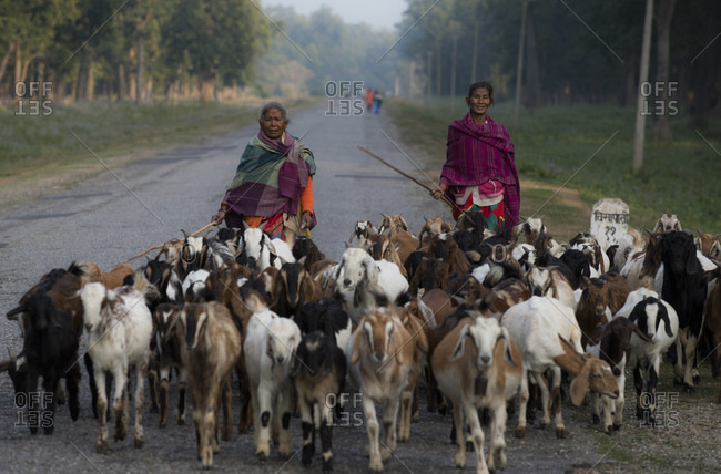February 11, 2014: Women guard goats, West Terai, Nepal