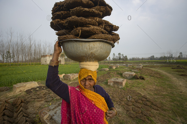 February 14, 2014: Indian women carry dried manure as heating material, Uttar Pradesh, India