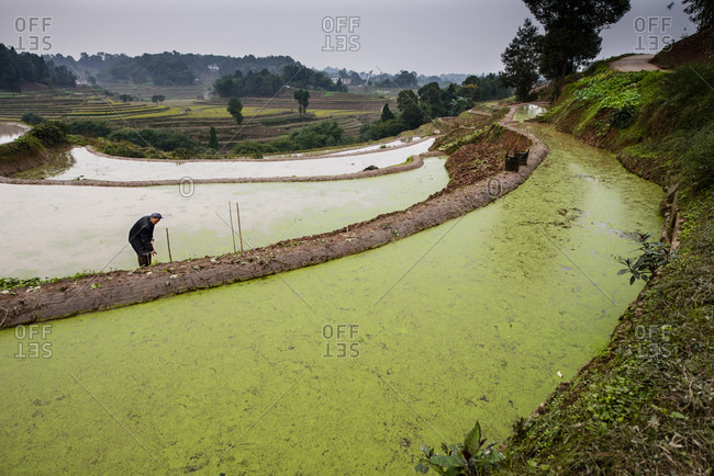 December 3, 2012: Traditional farming in terraces, rural Sichuan province, China